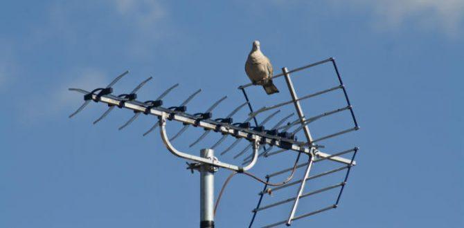 3684067588 993de13f5b o 100738559 large 670x330 - How to choose a TV antenna