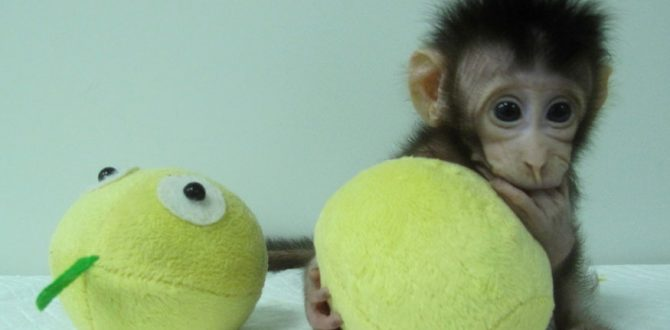 cloned monkey reuters 670x330 - Chinese Scientists Break Key Barrier by Cloning Monkeys