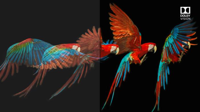 dv vs sdr bird 2