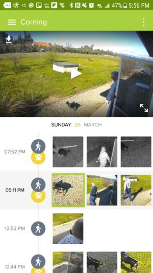 netatmo presence motion detection