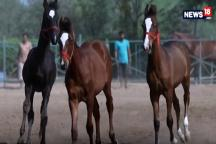 Guide to Buying a Horse: How to Buy a Perfect Horse